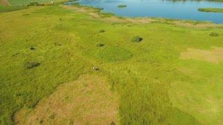 Beautiful landscape of green summer meadow