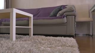 Beautiful sofa in the living room