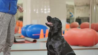 Black dog stand on the backward paws on the training