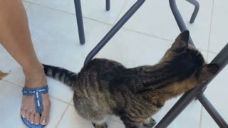 Cute cat rubs by the table