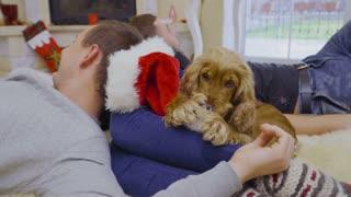 Cute dog chews Santa's hat