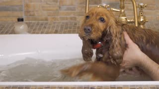 Cute dog swims in a hot bath with young man