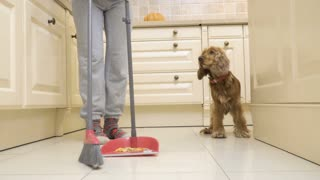 Dog eats from floor while his owner sweeps the kitchen floor