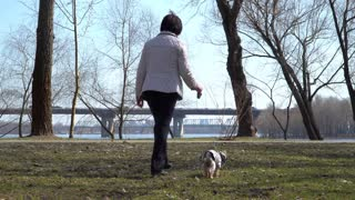 Elderly woman walks in spring park with little dog