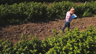 Farmer examining growth of strawberries at the field