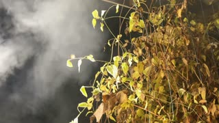 Green bush wrapped in smoke
