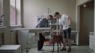 Guy with a dog at a reception in a veterinary clinic