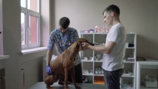 Guy with a dog on in a veterinary clinic