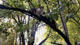Homeless cats on tree