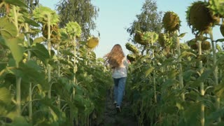 Little girl runs to the woman with balloons at the sunflower field