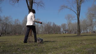 Mature woman walks in park with yorkshire terrier