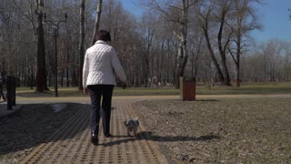Old woman walk in park with little dog