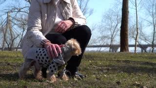 Senior woman stroking little dog