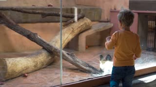 Small boy is looking at hyenas in the zoo