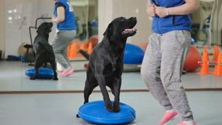 The cynologist trains the dog in the gym