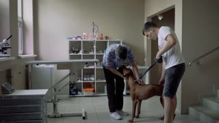The dog rejoices and jumps in the veterinary clinic