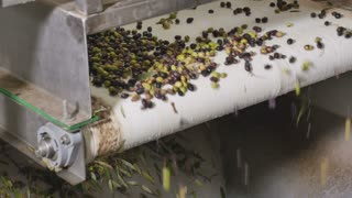 The olive oil production om modern factory