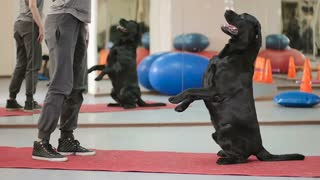 The trainer training a dog in the gym
