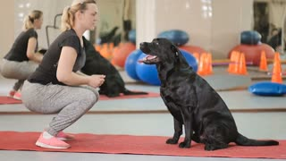 The woman trains the black labrador in the gym