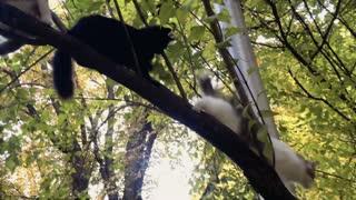 Three homeless cats on tree