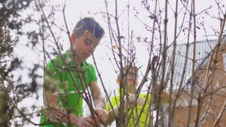 Two boys cut the bush with a pruner and gardening scissors
