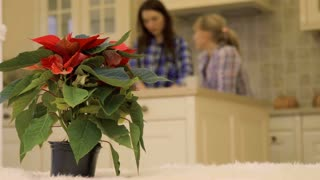 Two girlfriends talks at the kitchen at the background of christmas flower