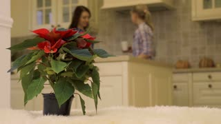 Two women talks at the kitchen at the background of christmas flower