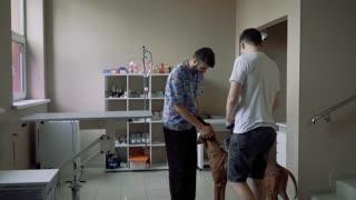 Veterinarian stroking a dog in a veterinary clinic