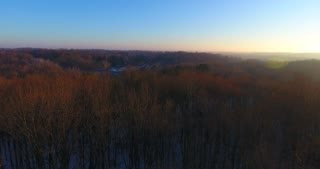 4K Aerial Fall Trees Sunrise Flyover Branches Pull Back