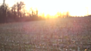 4K Insects Backlit Flying Sunset