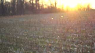 4K Insects Flying Into Backlit Sunset