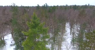 Aerial Michigan Winter Forest Flyover