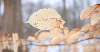 Beach Leaves Rustling In The Wind Tight Shot