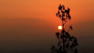 California Sunrise Tree In Foreground