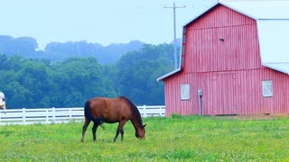 Horses and a Red Barn Grassy Field