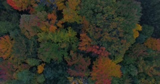 Michigan Aerial Fall Color Flyover Rising Shot