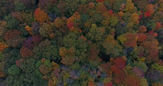 Michigan Aerial Fall Color High Flyover Top Down
