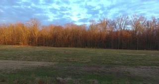 4K Morning Trees Aerial
