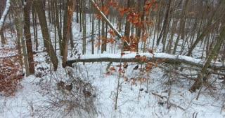 Turkeys In Snow Aerial Pull Back