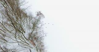 Turkeys In Snow Aerial