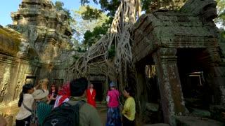 4K Angkor Wat Tomb Raider Temple Tree Slider Pan Up Ta Prohm Tourists Strangler Fig Trees World Travel Siem Reap Cambodia