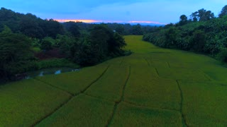 Aerial Rice Paddy Asian Rising Establishing Shot Farmers Fields To Urban Thailand Cambodia Vietnam Myanmar Nepal Mountians Hut Primative Neighborhood Drone Backcountry Country Primitive Flying Sunset Wilderness 4K