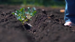 Planting Plants Gardener Bare Feet Farming Springtime Produce 4K Nature