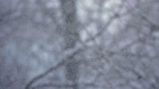 Slow Mo Snow Falling Snowflakes Winter Nature