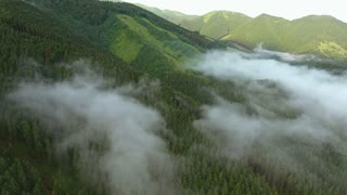 Aerial view of coniferous forest and rocky hills, Mala Fatra, misty day.