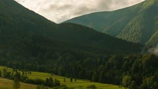 Coniferous forest and green grassland in Mala Fatra, Slovakia.
