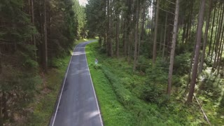 Country road in green sunny coniferous forest. Nature. Netherlands.