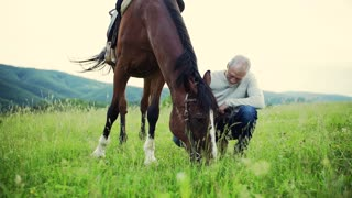 A happy senior man holding a horse grazing outdoors on a pasture. Slow motion.