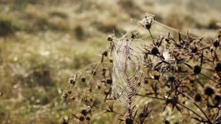 Close up of a spider on a cobweb. Autumn nature. Slow motion.