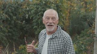 Senior man gardening in the backyard garden.
